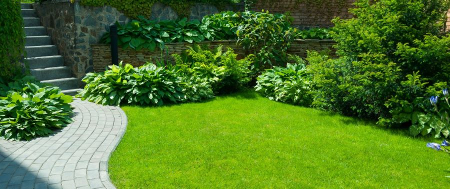 Garden shrubs