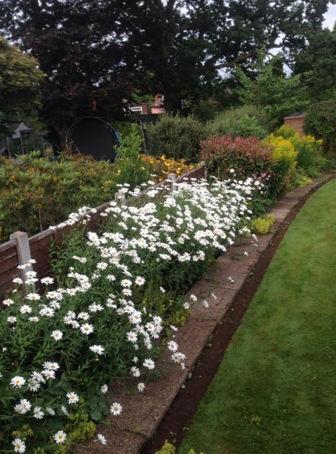 White flowerbeds
