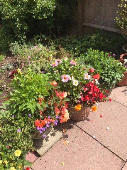 flowers planted in different shaped planters