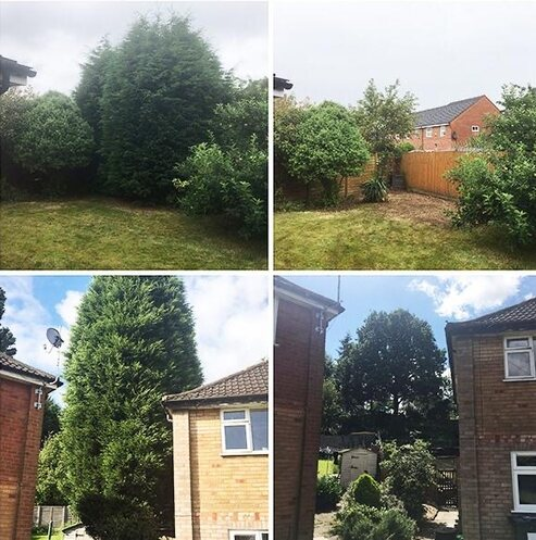 Tree lopping before and after