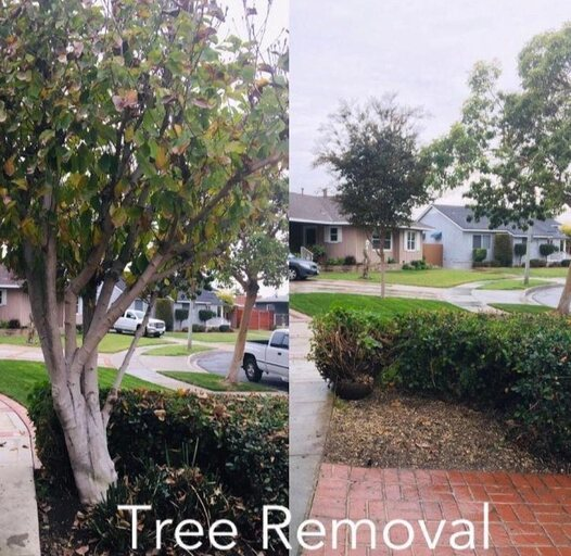 Tree removal before and after