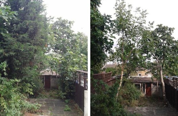 Branch removal before and after