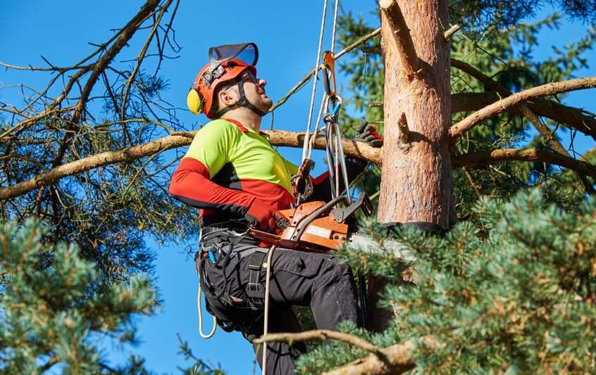 Tree Surgeon in Tree