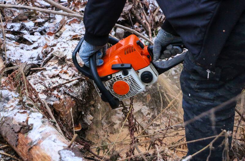 Tree surgeon felling log